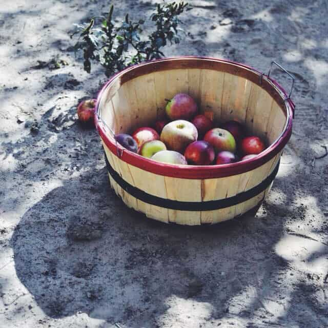 Apple Picking || Turntable Kitchen