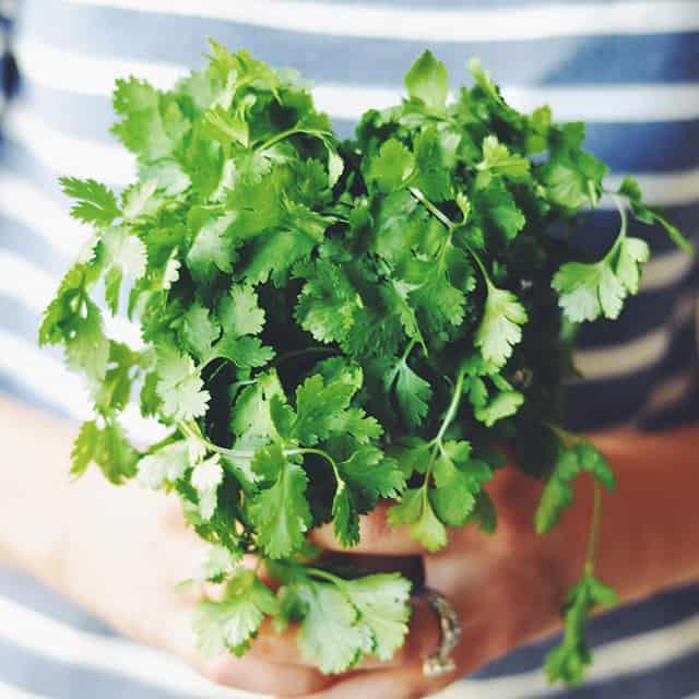 Herb Spotlight: 8 Ways to Use Cilantro