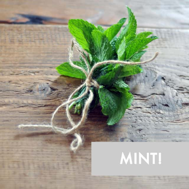 Herb Spotlight: 10 Ways to Use Fresh Mint
